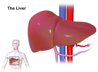 Tips for a healthy liver