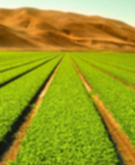 domain-featured-image-agriculture-food.j