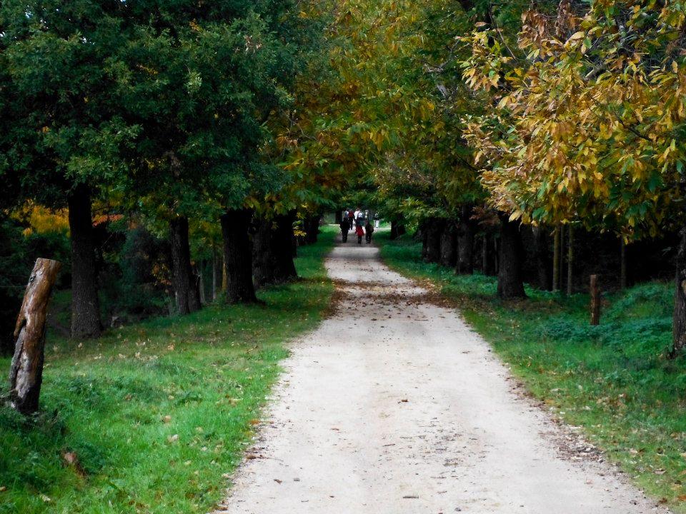 castanyers-viladrau-14