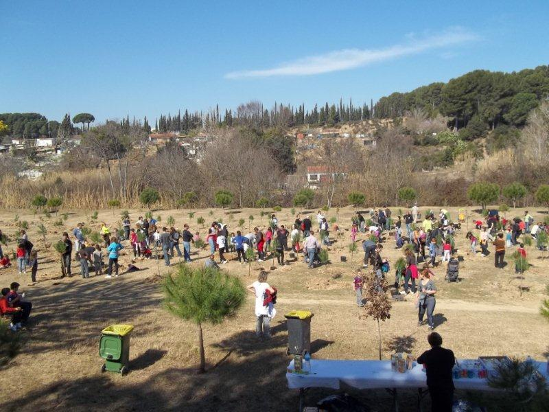 festa-arbre-2012-6
