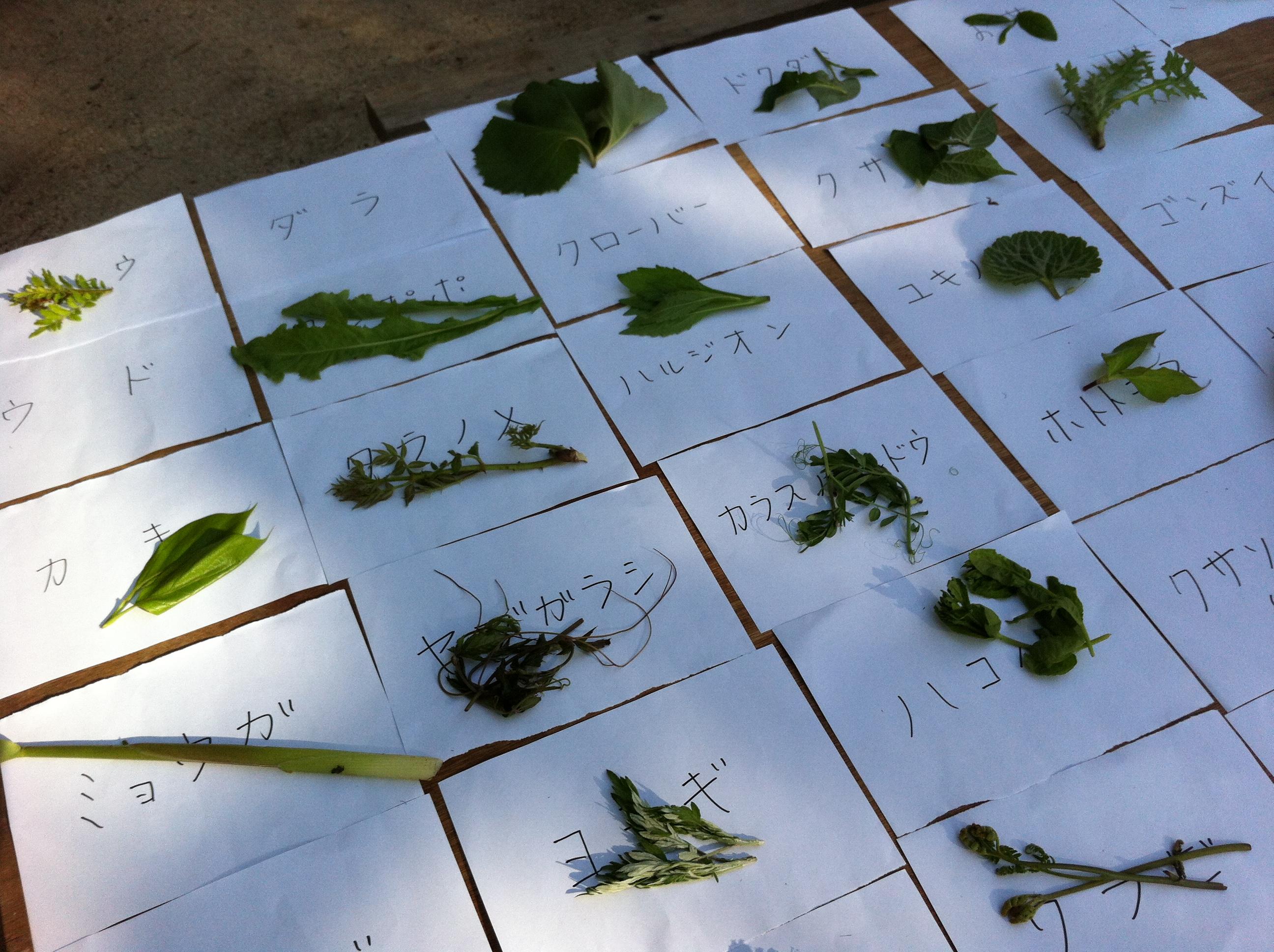 山菜取り体験
