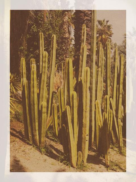 Jardins de Mossèn Costa i Llobera