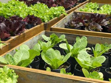 """Un """"logro histórico"""": Las granjas pequeñas y explotaciones agrícolas podrán vender de forma directa"""