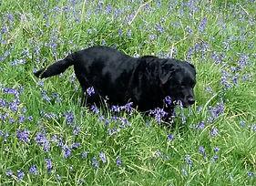 physio arthritic dog