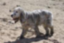 physio old dog