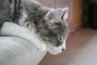 physio cat
