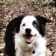 physio agility dog