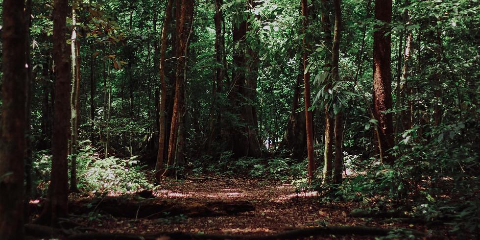 Cercle des Bois
