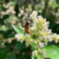 insecte La maison de l'Amethyste.jpg