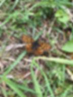 Papillon_La maison de l amethyste.JPEG