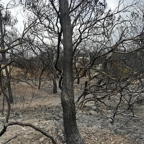 On Wildfires, Grief and Gratitude