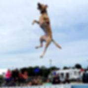 BLue jumping.jpg
