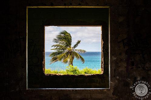 Framed Palma
