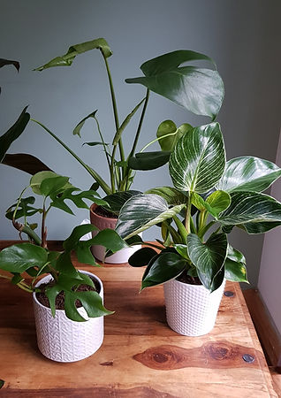 Group%20of%20plants%20photo_edited.jpg