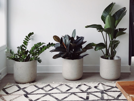 Top tips on caring for houseplants