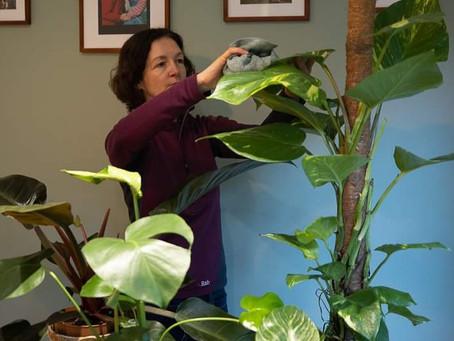 Winter care tips for houseplants.