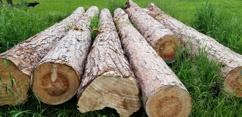 Norway Pine logs