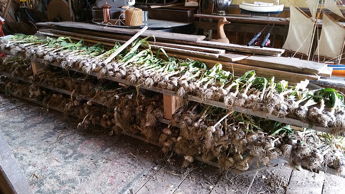 Canaan farm Organic Compost & Fresh Garlic