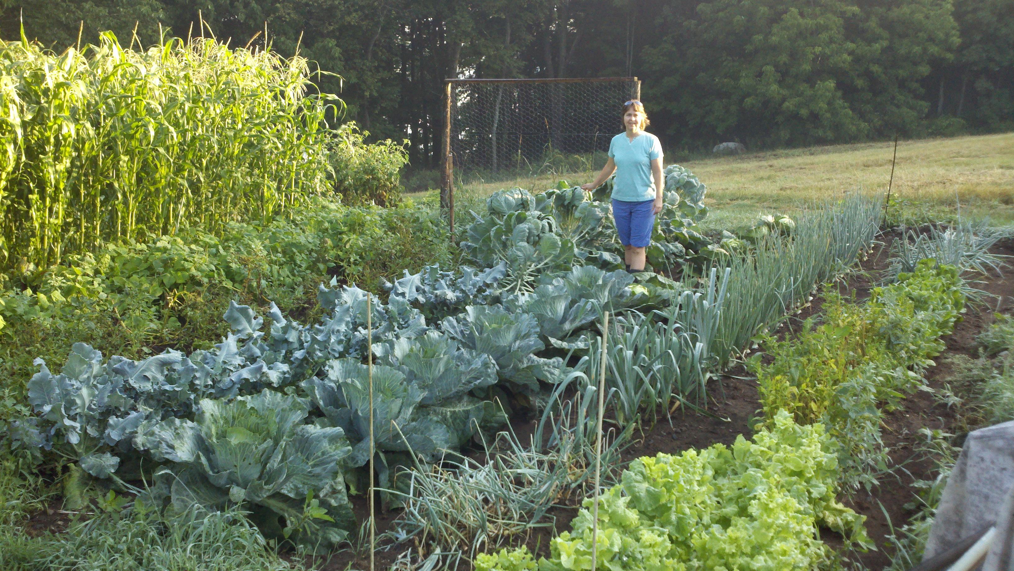 Garden in full swing