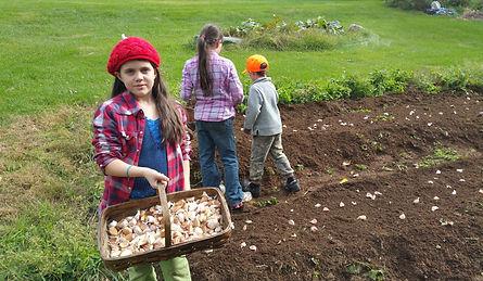 Canaan Farm Organic Garlic