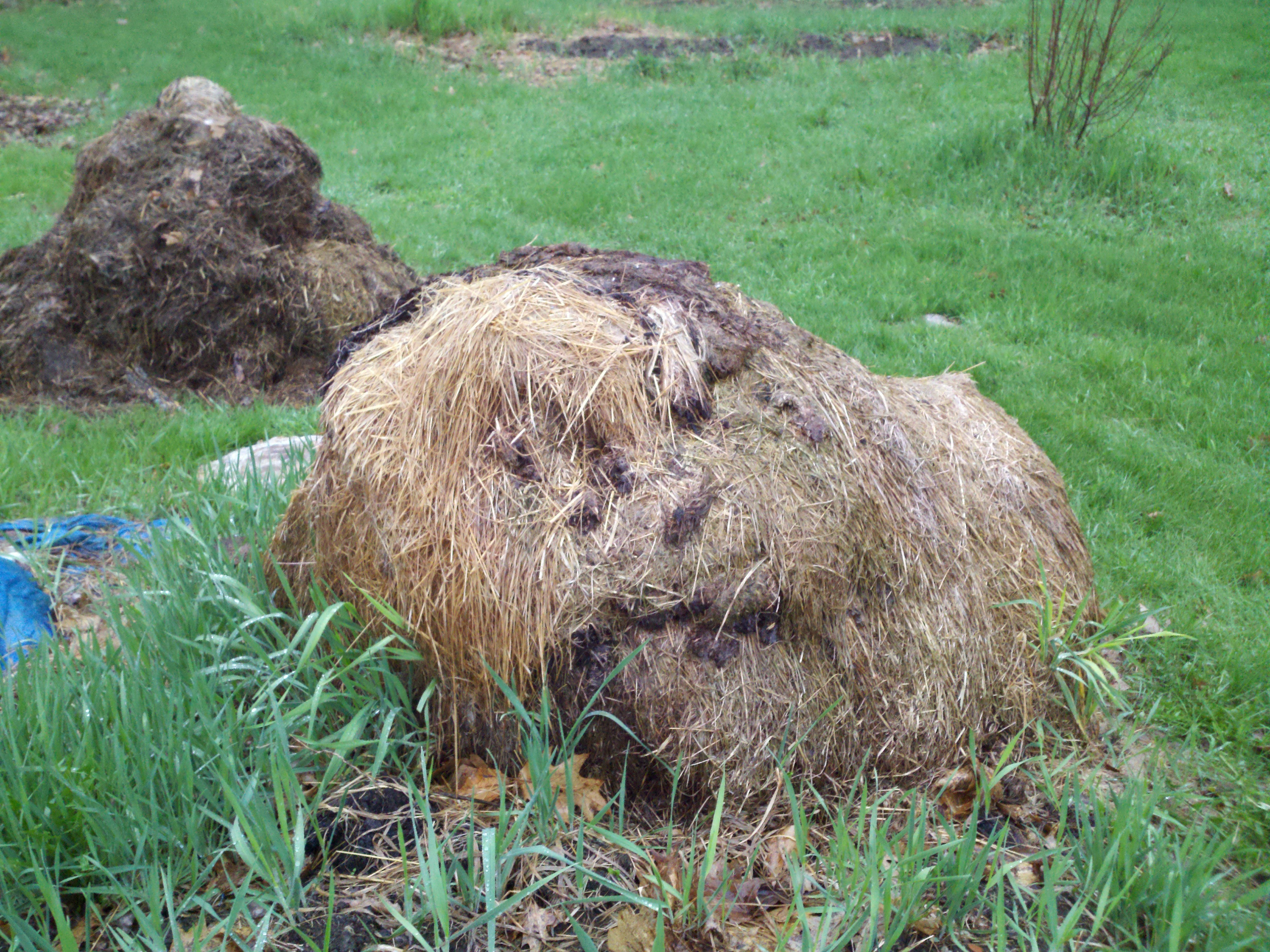 Just a funny face in the bale