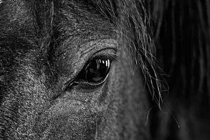 horse%20eye_edited.jpg
