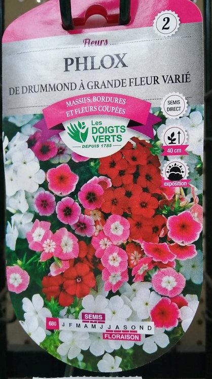 Phlox de drummond à grande fleur varié n°2
