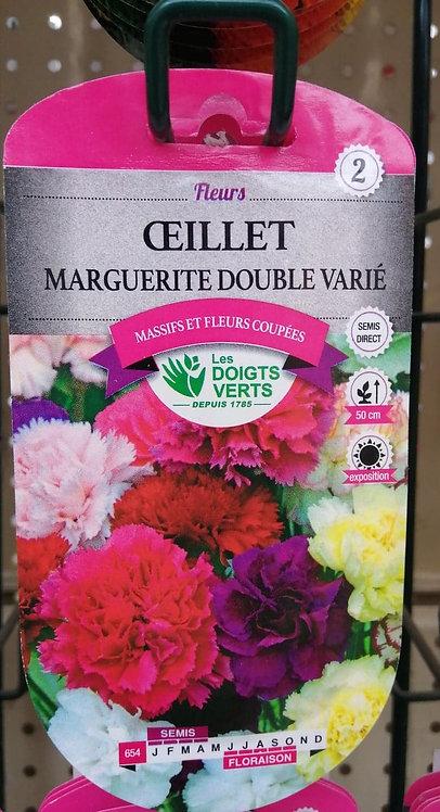 Oeillet marguerite double varié n°2