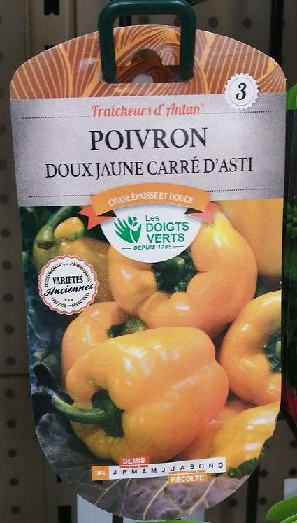 Poivron doux jaune carré d'Asti n°3