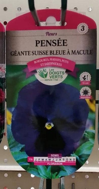 Pensée géante suisse bleue à macule n°3