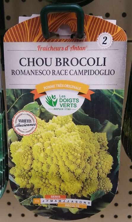 Chou brocoli romanesco race Campidoglio n°2