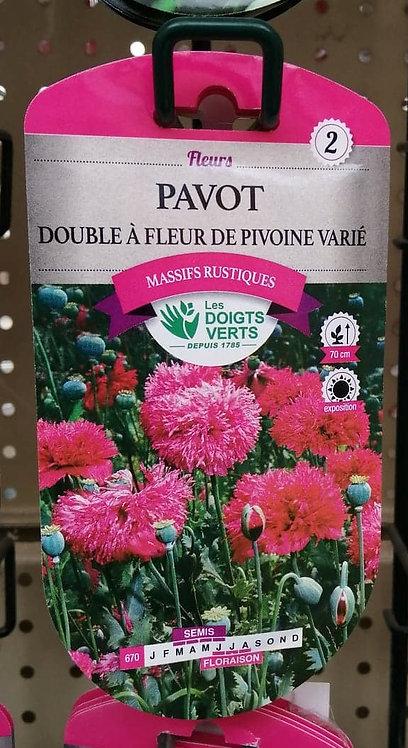 Pavot double à fleur de pivoine varié n°2