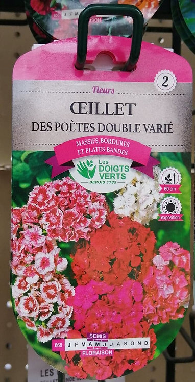 Oeillet des poètes double varié n°2
