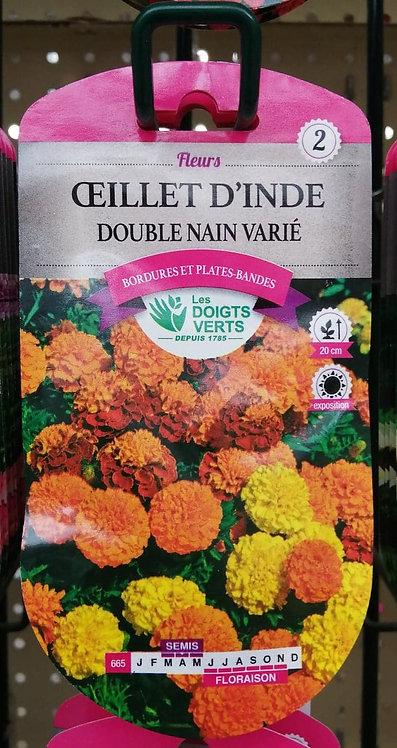 Oeillet d'Inde double nain varié n°2