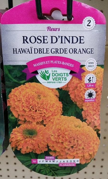 Rose d'Inde Hawaï grande orange n°2