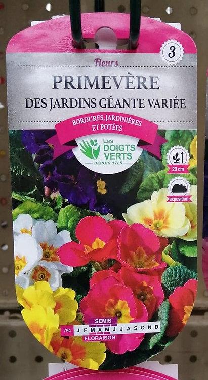 Primevère des jardins géante variée n°3