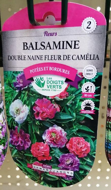 Balsamine Double naine fleur de camélia n°2