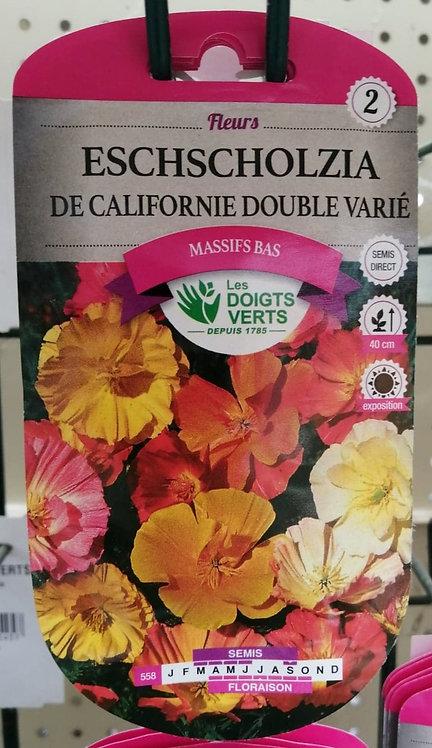 Eschscholzia  De Californie double varié n°2