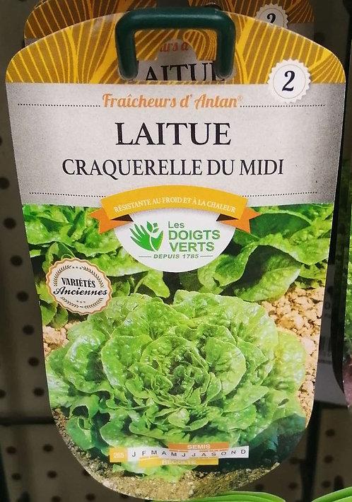 Laitue craquerelle du Midi n°2