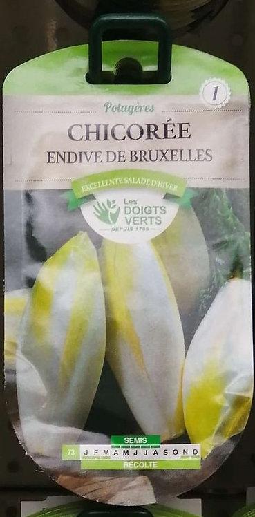 Chicorée endive de Bruxelles n°1