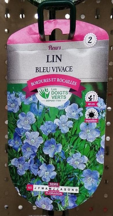 Lin bleu vivace n°2