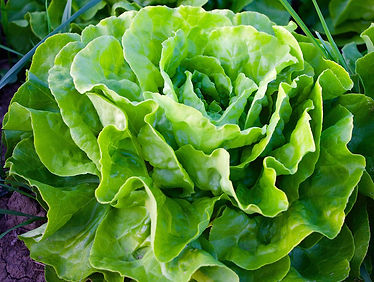 Salade appia.jpg