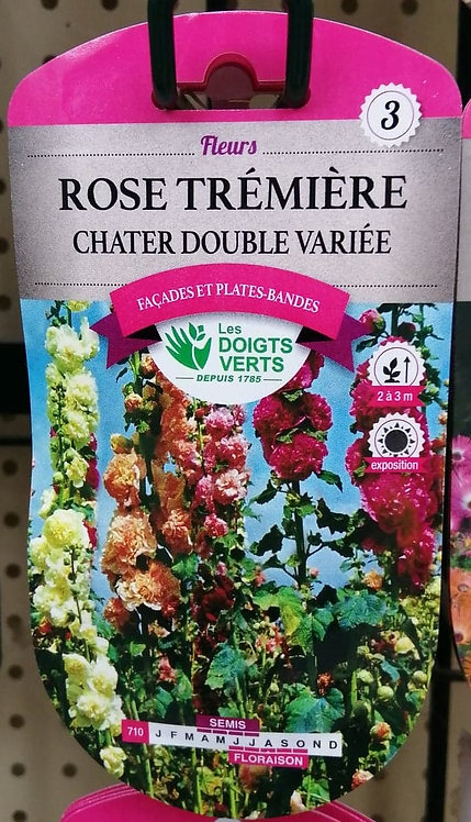 Rose trémière chater double variée n°3