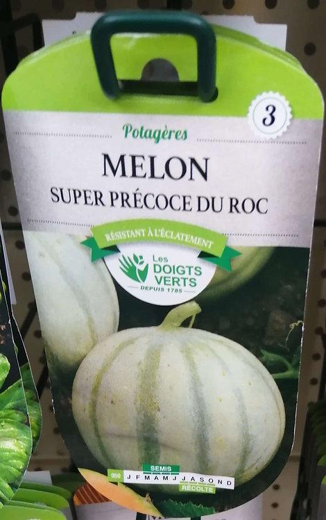 Melon super precose du roc n°3