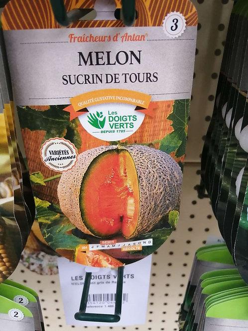 Melon sucrin de Tours n°3