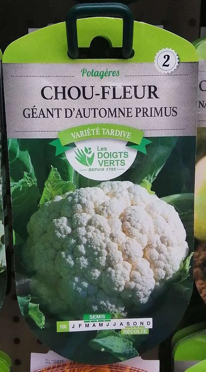 Chou-Fleur géant d'automne primus n°2