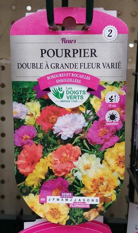 Pourpier double à grande fleur varié n°2