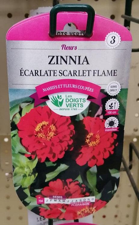 Zinnia écarlate scarlet flame n°3