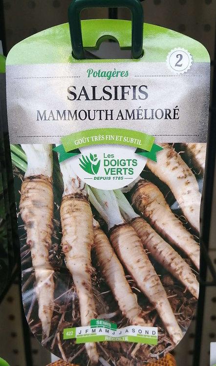 Salsifis mammouth amélioré n°2