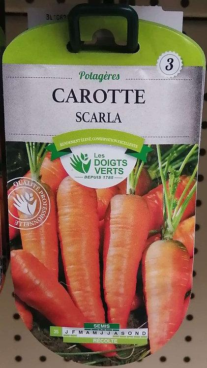 Carotte Scarla n°3